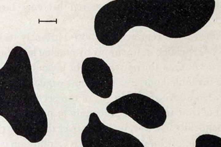 From The Chemical Basis of Morphogenesis, Alan Turing, 1952.