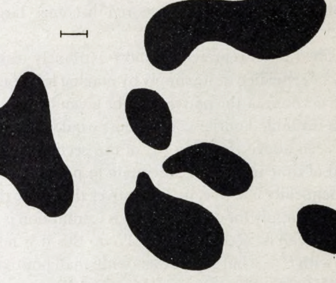 Dappled picture of spots looking like a Fresian cow taken from Chemical Basis of Morphogenesis